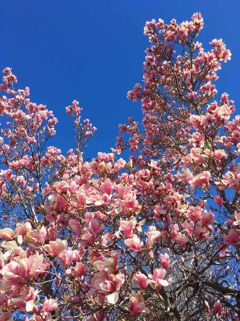begin again spring equinox